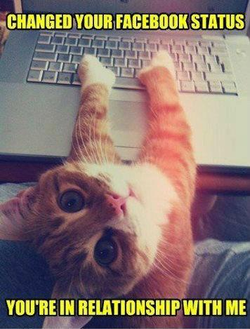 I Changed Your Facebook Status - Cat humor