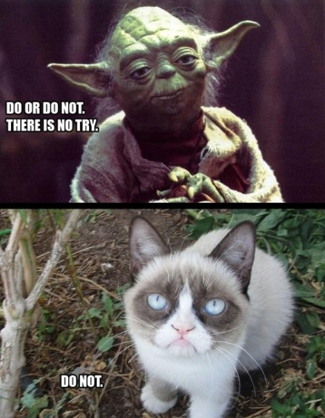 Do Or Do Not - cat humor