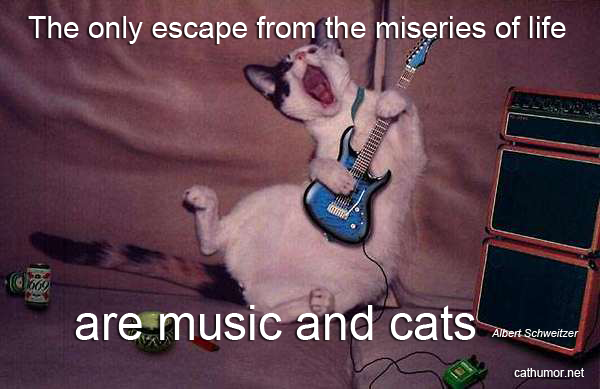 Escape From The Miseries Of Life - Cat humor
