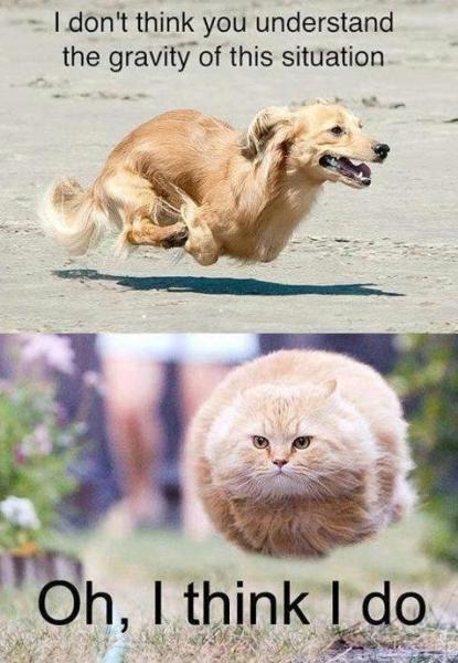 Gravity lesson - Cat humor
