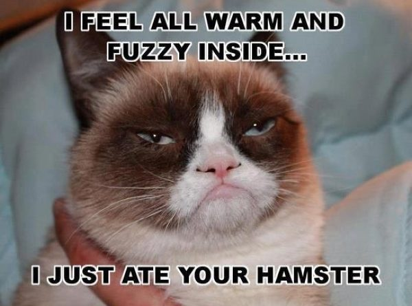 I Feel Warm and Fuzzy Inside - Cat humor