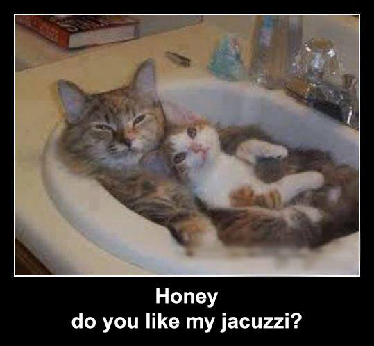 Do You Like My Jacuzzi - Cat humor