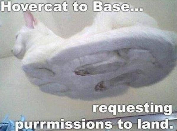 Hovercat To Base - Cat humor