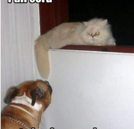 How It Started - Cat humor