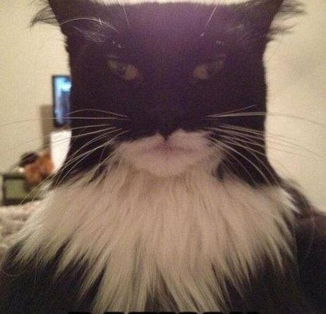 I am batman - Cat humor