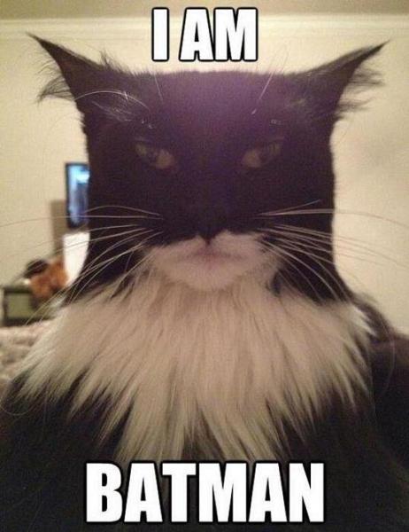I am batman - Cat humor