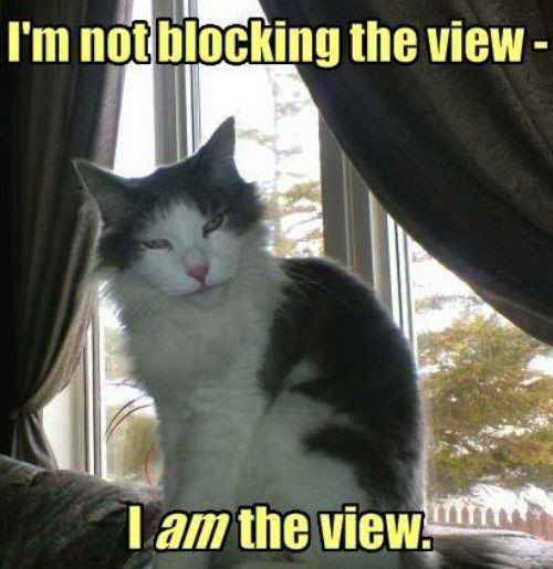 I am The View - Cat humor
