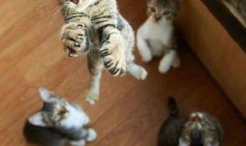 I must go - Cat humor
