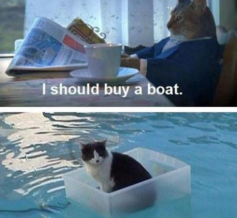 I Should Buy a Boath - Cat humor