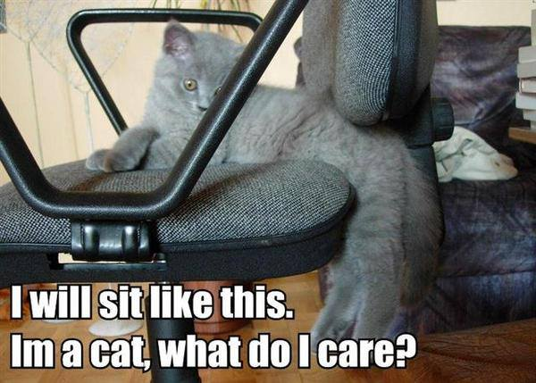 I will sit like this - Cat humor