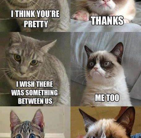 Something between us - Cat humor