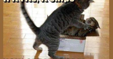 If it fits, it ships - Cat humor