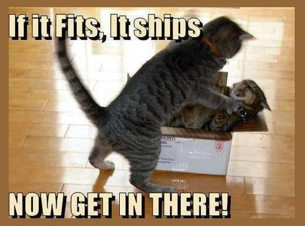 If it fits, it ships - Cat humor