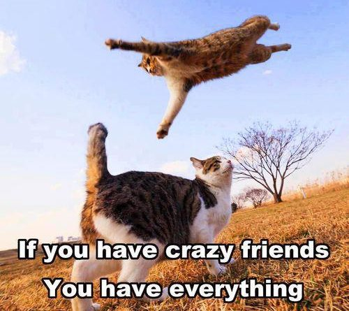 If You Have Crazy Friends - Cat humor