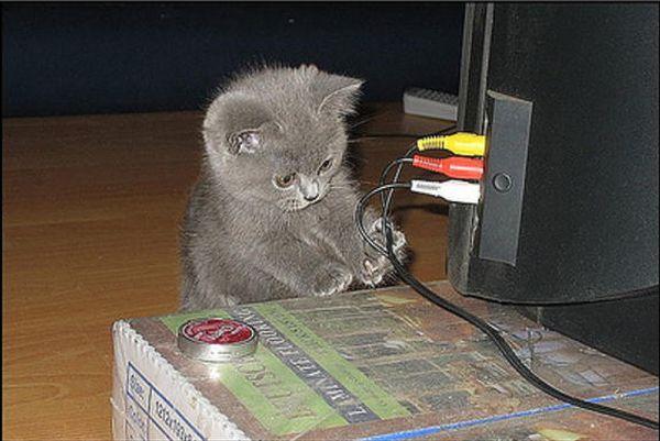 I'll fix it - Cat humor
