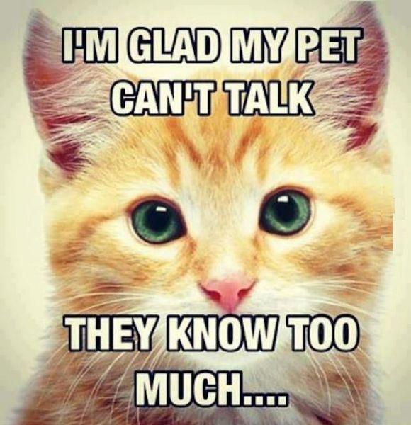 I'm Glad My Pet Can't Talk - Cat humor