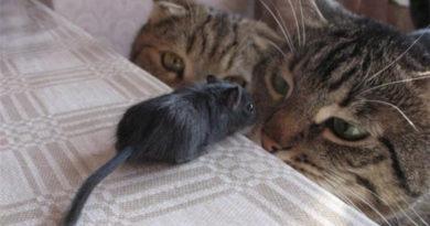 It's a Deal! - Cat humor