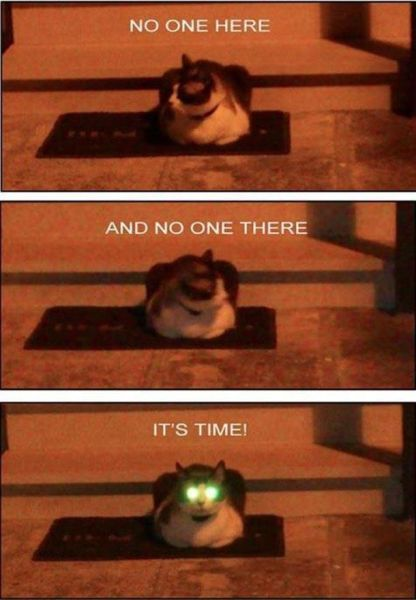 It's time - Cat humor
