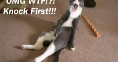 Knock first - cat humor