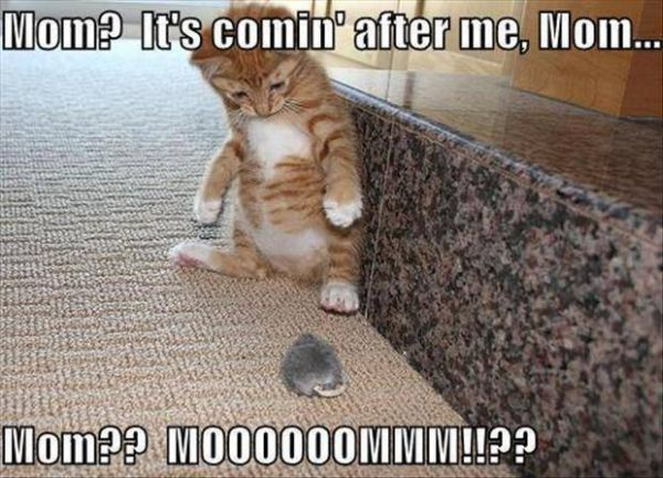 Mom his coming after me - Cat humor