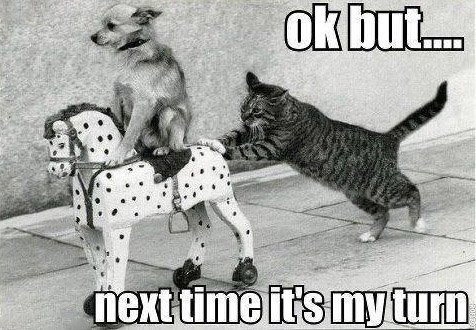 Next Time Is My Turn - Cat humor
