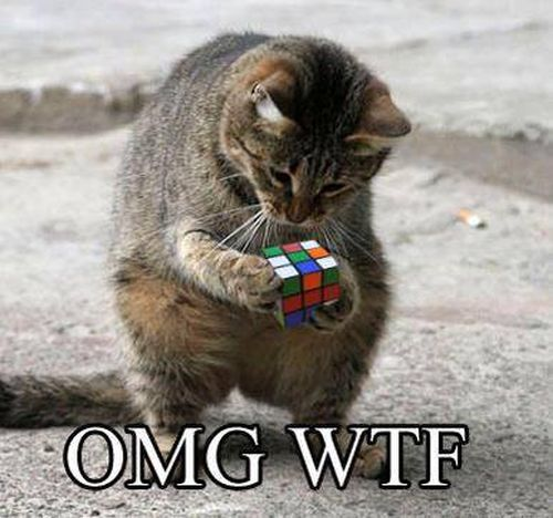 OMG - Cat humor