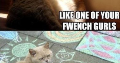 Paint me - Cat humor