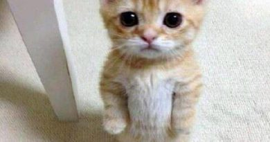 Power of Cuteness - Cat humor