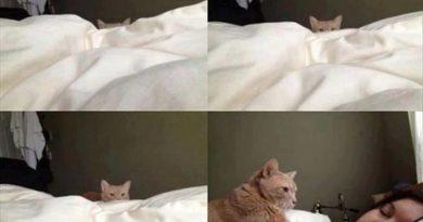 Psst hey - Cat humor