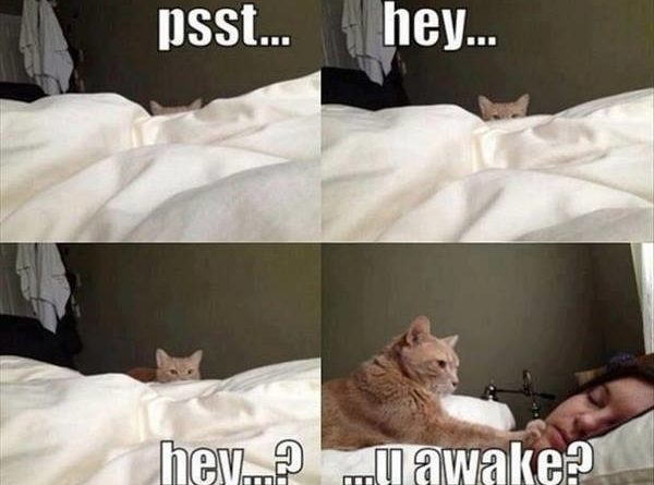 Psst hey - Cat humor