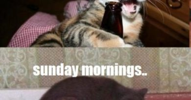 Saturday nights, Sunday mornings - Cat humor