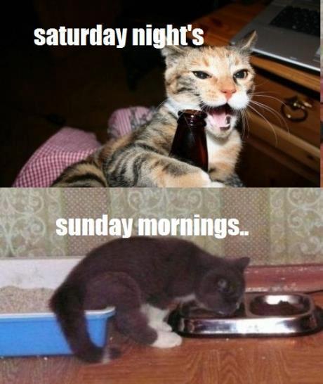 Saturday nights, Sunday mornings - Cat humor