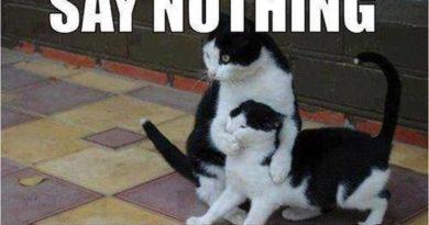 Blame the dog - Cat humor