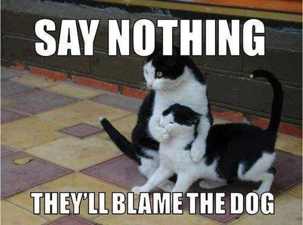 Blame the dog - Cat humor