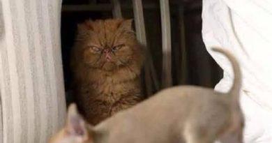 Soon - Cat humor