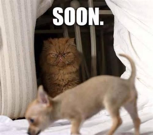 Soon - Cat humor
