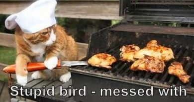 Stupid bird - Cat humor