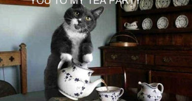 Tea party - Cat humor