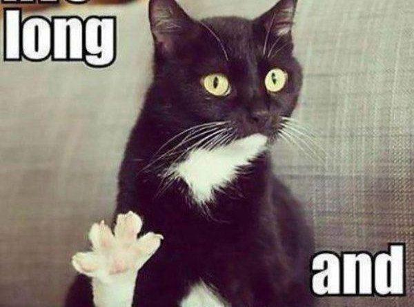 Vulcan cat - Cat humor
