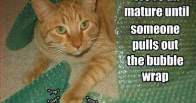 We are all mature until... - Cat humor