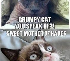 Who Is This - Cat humor