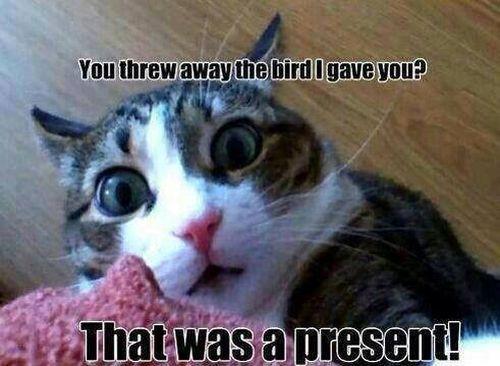 You threw my present - Cat humor