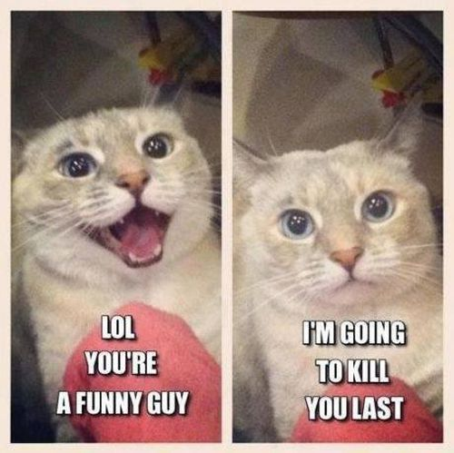 You are funny guy - Cat humor