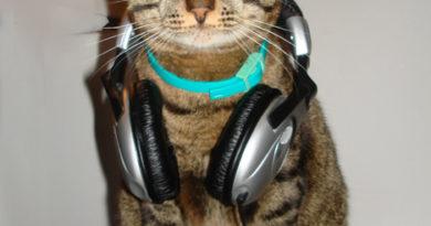 DJ Cat - Cat humor