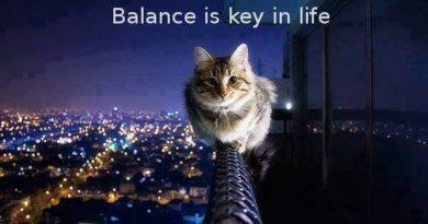 Balance Is Key In Life - Cat humor