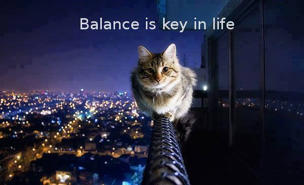 Balance Is Key In Life - Cat humor