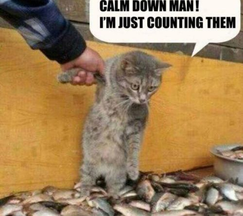 Calm Down Man! - Cat humor