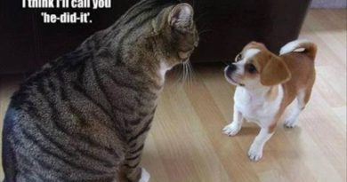 Why Hello Little Fellow - Cat humor