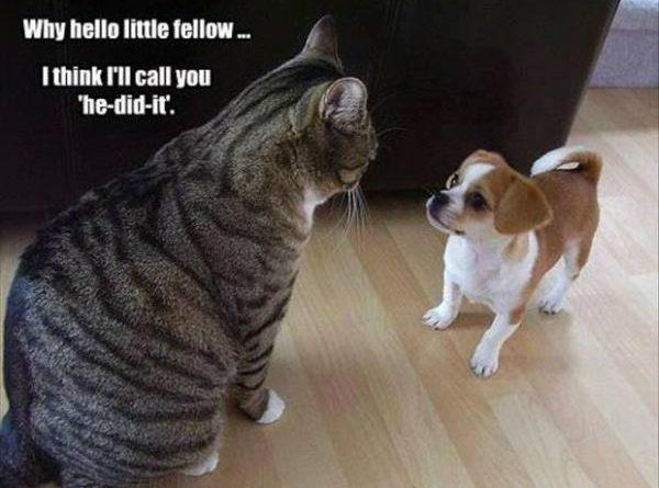 Why Hello Little Fellow - Cat humor