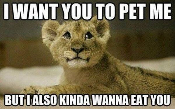 I Want You To Pet Me - Cat humor
